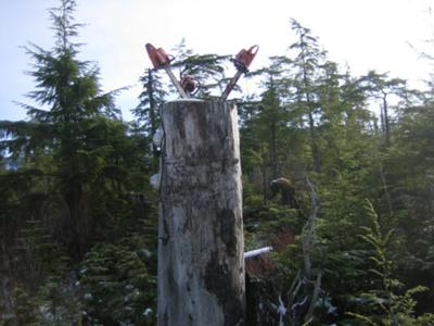 the chain saw tree